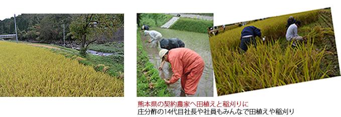 熊本県の契約農家へ田植えと稲刈りに